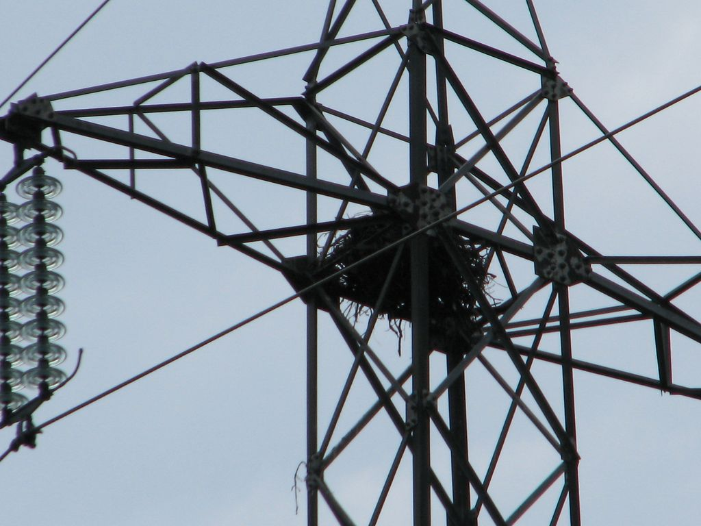 Co-existence of the transmission line and the birds